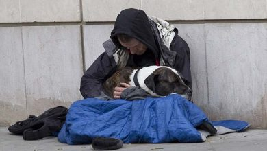 Photo of The Dog Teaches The Beggar Become a Richer