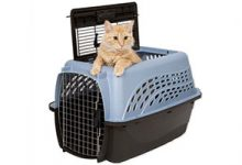 Photo of Top 6 Best Cat Travel Carriers in 2019 Reviews